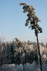 im Winterwald auf der Quohrener Kipse (SofteisBoy) Tags: winter raureif winterlandscape winterlandschaft pentaxk7 smcpentaxf50mm17