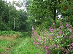 Landgoed  Zelle (Dimormar!) Tags: 2004 vakantie groen achterhoek gelderland hengelo landgoedzelle geenautosgeenfietsersheerlijkrustig padachteronshuisje