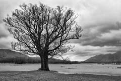 Ladore Landings (Geoff France) Tags: tree water flood yacht derwent lakes keswick borrowdale swissladore