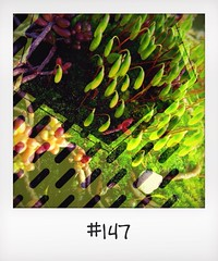 "#DailyPolaroid of 22-2-14 #147 • <a style=""font-size:0.8em;"" href=""http://www.flickr.com/photos/47939785@N05/12934763995/"" target=""_blank"">View on Flickr</a>"