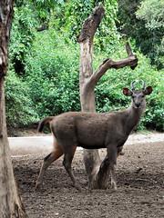 mysore zoo 13