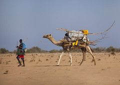 A Man Carrying An Aqal Soomaali Somali Hut On The Back Af A Camel, Zeila, Somaliland (Eric Lafforgue Photography) Tags: africa woman house man color horizontal outdoors exterior african transport move camel transportation nomad somali livestock means greysky somalia somaliland hornofafrica onepersononly africanethnicity aqual zeila photographphoto ceylac blackethnicity zeilasaylacceylac aqalsoomaalisomalihut camellivestock animalmammalherbivorous
