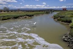 DSC_8305 (RHMImages) Tags: park ca bird water landscape flying nikon fremont donedwards wetlands marsh d600 donedwardssanfranciscobaynationalwildliferefuge