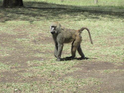 Singe, Nakuru, Kenya