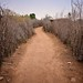 Village Path, Nyangaton, Ethiopia