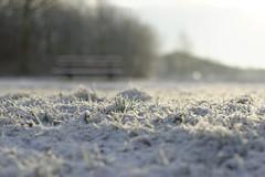 _DSC4232_DxO (Transcontinenta) Tags: snow sneeuw goldenhour nikond800 samyang85mmf14asifumcaspherical