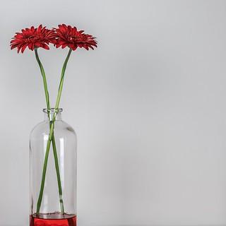 Red Flowers Minimalism