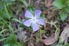 Forest Flower (everyday sh⊙_☉ter) Tags: park beach forest sydney waterfalls kookaburra wattamolla garie royalnationalpark audley stanwell hackerriver