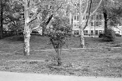 XT1-05-12-15-145-2 (a.cadore) Tags: nyc newyorkcity blackandwhite bw zeiss landscape uptown fujifilm riversidepark uws carlzeiss xt1 biogont2828 zeissbiogon28mmf28 fujifilmxt1