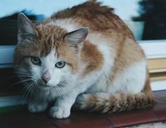 #15 (amichalska) Tags: blue orange brown white nature cat vintage moody outdoor canon350d paws boho bohemian topcat tolek