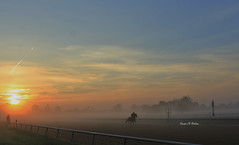 Foggy Morning Gallop (susanmbarlow) Tags: horse fog racetrack racehorse thoroughbred equus delawarepark equidae thoroughbredracing equusferuscaballus delparkracing