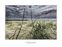 #DH682 (Didier Hannot Photography) Tags: blue sky seascape green beach weather yellow clouds landscape sand cloudy herbs turquoise sable coastline plage cloudcover cloudysky stormyweather breakwater endoftheworld herbes presqule bigspace briselame gvres presquledegvres didierhannotphotography
