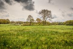 Hatertse Vennen-55 (stevefge (away travelling)) Tags: nature netherlands nederland natuur wetlands fields wildflowers hatertsevennen reflectyourworld