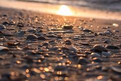 Sunset at the beach (alxfink) Tags: lumix shell ostfriesland juist niedersachsen