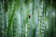 :) (Anne takes photos) Tags: life flowers light nature colors beautiful beauty animal canon photography eos colorful little bokeh atmosphere ladybird lovely 50d