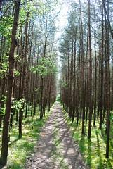 Pijnven 160519 49 (KB3680) Tags: bos limburg kempen bosland lommel kerkhoven eksel pijnven lagekempen hechteleksel