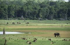 Kabini (The Ranzi) Tags: kabini landscapes green india wildlife elephants blue water safari nikon nikon70200f28vr2 nikond750 nikon17 travel