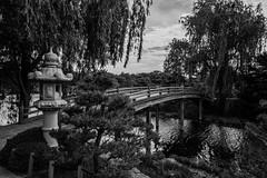 Japanese Garden (Love Any Kind of Photography) Tags: bridge blackandwhite chicago landscape japanesegarden illinois willow waterscape chicagobotanicgarden chicagotripjune2016