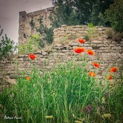 Sommires (Patrice Faur) Tags: 30 vintage village poppy printemps gard coquelicots sommires villagemdival villagetypique