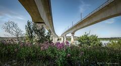 Pont TGV_ Avignon (Rmi Avignon) Tags: bridge pont avignon