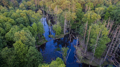 Above the Swamp (LDasmaria) Tags: trees lake newyork water forest reflections river flying scenic calm aerial swamp zena lookingdown phantom woodstock aerialphotography drone shotfromabove dji quadcopter