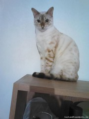 [Reunited] Wed, May 25th, 2016 Lost Female Cat - Finnstown Hall Apt, Lucan, Dublin (Lost and Found Pets Ireland) Tags: dublin apt cat lost hall may 2016 finnstown lostcatfinnstownhallaptdublin