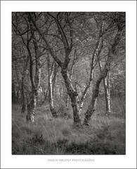Briham 2 (shaun.argent) Tags: morning trees tree texture nature woodland mono spring woods flora seasons grasses shaunargent