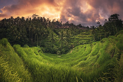 Bali - Ubud Tegalalang Rice Terraces (claudecastor) Tags: travel sunset bali panorama rot nature sunrise indonesia landscape asia asien southeastasia sdostasien sonnenuntergang natur unesco landschaft sonnenaufgang indonesien ubud reise riceterrace mountagung reisfelder mountbatur jatiluwih tegalalang reisterrassen