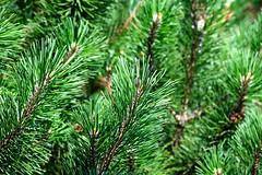 Michigan Pine Leaves (jonathanli12) Tags: bridge lake sports nature grass sign basketball pine landscape pond michigan logs peaceful greenery serene shrubs hdr
