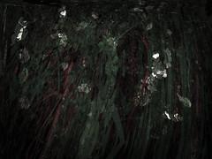 270616-3-1 (chrisfriel) Tags: flowers memorial friel