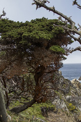 Point Lobos State Reserve (kevinmarquezphoto) Tags: pointlobos statereserve