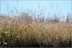 Grass & Wildflowers (Mabacam) Tags: mountain mountains nature walking landscape outdoors countryside spain view hiking country andalucia trail moorish vista grasses wildflowers 2016 sayalonga canillasdealbaida