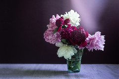 9-100 brought some summer to home with me.jpg (Albta Pilaov) Tags: 100 9 9100 flower home peony pink plant still stilllife summer