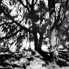 morning tree shadows (johngpt) Tags: trees newmexico tree wall shadows unitedstates albuquerque places newmexicomuseumofnaturalhistoryandscience hipstamatic appleiphone5 lowylensblackeysextrafinefilmnoflash