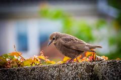The lone one. (D J Alexander) Tags: ireland summer sun bird nature animal canon garden feeding outdoor wildlife cork sparrow mallow