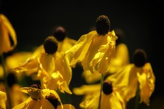 Snapseed-113 (plymelllisa) Tags: us unitedstates kansas lenexa shawneemissionpark