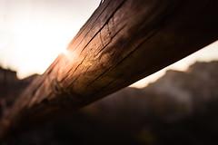Sun Flare (SDB79) Tags: flare sole tronco legno sunflare molise