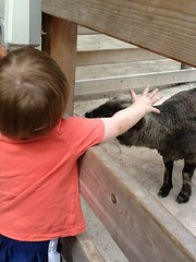 "Paul at the Petting Zoo at the Kansas City Zoo • <a style=""font-size:0.8em;"" href=""http://www.flickr.com/photos/109120354@N07/27754676522/"" target=""_blank"">View on Flickr</a>"