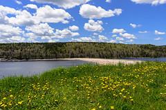 Sand Bar (Ron Scubadiver's Wild Life) Tags: flowers sky canada beach nova clouds landscape nikon scotia 24120