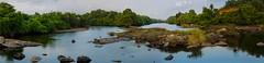 Panorama of two rivers' merging (sangam) (keyaart) Tags: nature rivers konkan kanakavli varavade