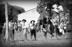 No pulo (Eduardo Amorim) Tags: brazil horses horse southamerica brasil criollo caballo cheval caballos cavalos pelotas pferde cavalli cavallo cavalo gauchos pferd riograndedosul pampa hest hevonen campanha brsil chevaux gaucho  amricadosul fronteira hst gacho  amriquedusud  gachos  sudamrica suramrica amricadelsur  sdamerika crioulo caballoscriollos criollos jineteada   americadelsud gineteada  crioulos cavalocrioulo americameridionale caballocriollo eduardoamorim cavaloscrioulos