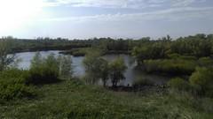 May greens (Energonik) Tags: tree green nature river may greentree