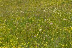 IMG_0675-230 (Martin1104) Tags: fotografie natuur bergen landschap vlinders yagodina snp bulgarije natuurfotografie natuurreis