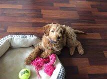 Maggie's adorable little girl Bella!