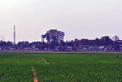 Nuansa Pinggiran (BxHxTxCx) Tags: jakarta ricefields sawah