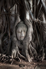 Buddha in the roots (Guy Francis Exposures) Tags: travel history thailand ruins bangkok streetphotography buddah