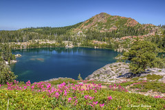 Summer in the Sierras (sierrasylvan) Tags: california flowers blue trees red summer sky orange plants white lake mountains green nature water forest canon landscape rocks blossom outdoor hiking blossoms gray trail filter adobe fir bloom wildflowers blooms penstemon hoya islandlake nevadacounty sierranevadamountains penstemonnewberryi mountainpride tahoenationalforest roundlaketrail canoneos50d sierrarange canonefs1585mmf3556isusmlens hoyahdcircularpolarizingfilter fallcreekmountain photomatixpro5 adobebridgecc adobelightroomcc2015 adobephotoshopcc2015
