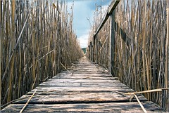 Path to the clouds | Sic-Cluj, Romania (Stefan Cioata) Tags: travel vacation holiday tourism beautiful photography marketing europe view image sale exploring details great joy visit explore most sight lovely top10 iconic available advertise touristical flickrandroidapp:filter=none