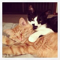 BFFs (merrickball) Tags: cat square kitten squareformat finnegan stinks iphoneography instagramapp uploaded:by=instagram foursquare:venue=4bd48211637ba593f5ccf470