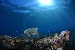 2013 05 METTRA OCEAN INDIEN 2970